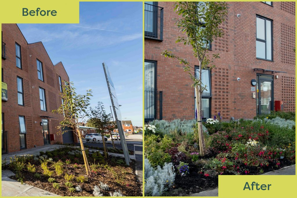 Before and after of the gardens at Potters Mews